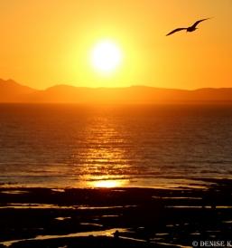 gull sunset 1aa