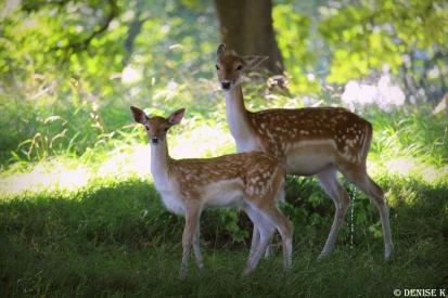 aug deer4