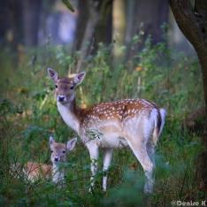 Best Bambi Mum