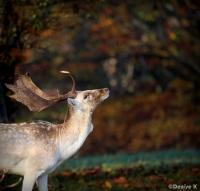 Deer edit 3